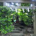 Photos: 江古田氷川神社(中野区江古田)鎮魂霊神社
