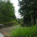 本多山公園(中野区江古田)
