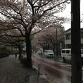 Photos: 13.04.02.哲学堂公園外(中野区)北面
