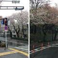 Photos: 13.04.02.哲学堂公園外(中野区)北西より南西