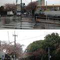 Photos: 13.04.02.哲学堂公園外(中野区)西より南北