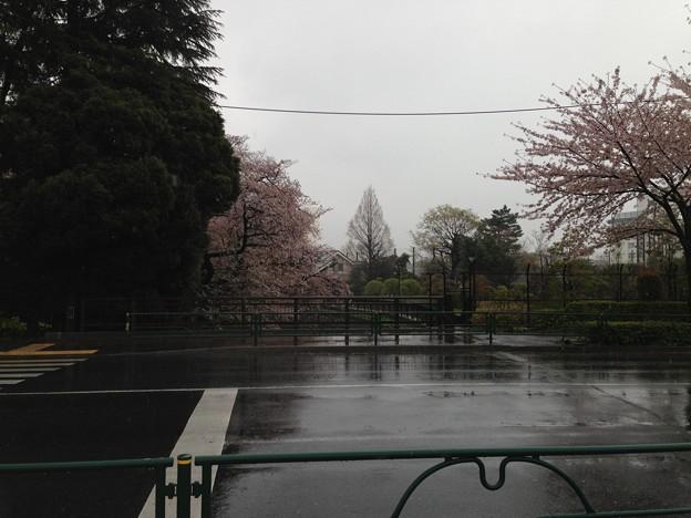13.04.02.哲学堂公園外(中野区)西より東 妙正寺川