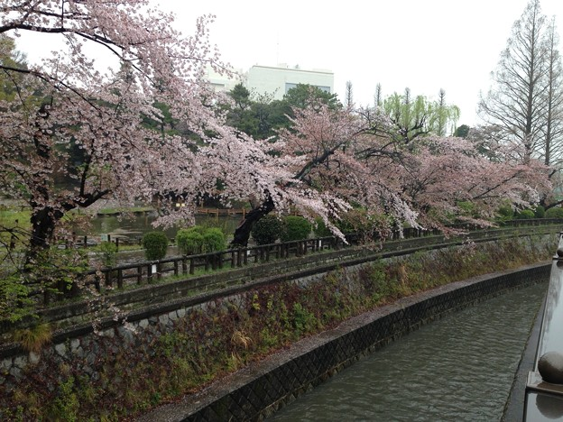 13.04.02.妙正寺川公園より(中野区)哲学堂公園/絶対城