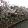 Photos: 13.04.02.妙正寺川公園より(中野区)哲学堂公園/絶対城