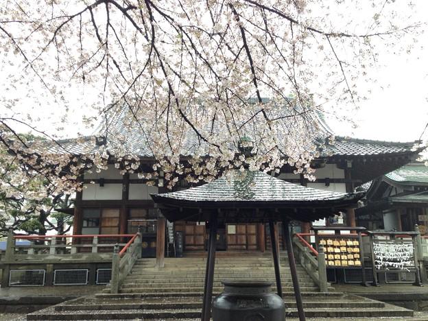 13.04.02.新井薬師(中野区新井)瑠璃殿
