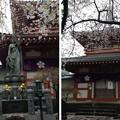 Photos: 13.04.02.新井薬師(中野区新井)薬師霊堂