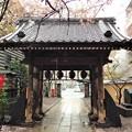 Photos: 13.04.02.新井薬師(中野区新井)山門