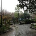 Photos: 13.04.02.新井薬師公園(中野区新井)