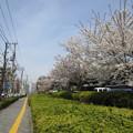 Photos: 12.04.10.旧渋沢庭園/飛鳥山公園(東京都北区)