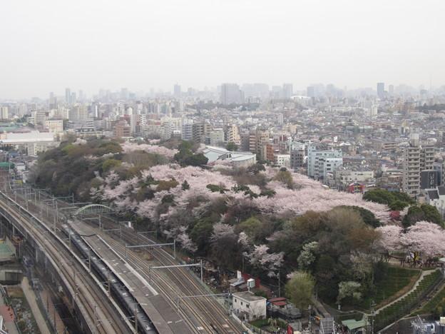 12.04.10.北とぴあ展望室より(東京都北区)飛鳥山と