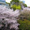 Photos: 12.04.10.音無親水公園(東京都北区)