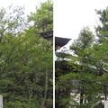 Photos: 12.04.10.王子神社(東京都北区)