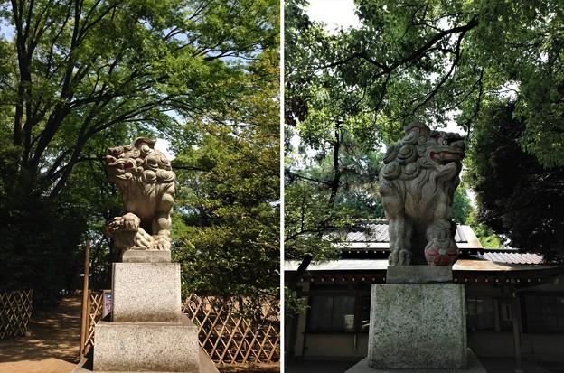 Photos: 13.06.09.王子神社(東京都北区)