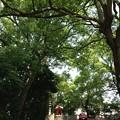 13.06.09.王子神社(東京都北区)関神社