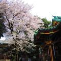 Photos: 12.04.10.王子稲荷神社(東京都北区)