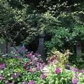 Photos: 13.06.09.王子稲荷神社(東京都北区)
