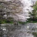 Photos: 12.04.10.名主の滝公園(東京都北区)
