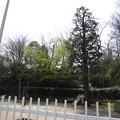 12.04.10.八幡山児童遊園(北区中十条)