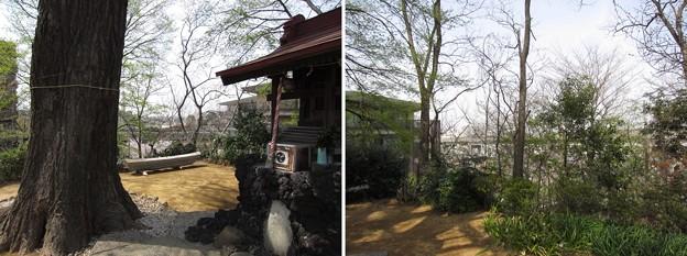 12.04.10.八幡山 若宮八幡神社(北区中十条)