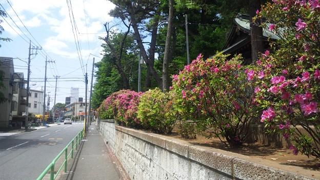 12.05.16.豊玉氷川神社(練馬区豊玉南)