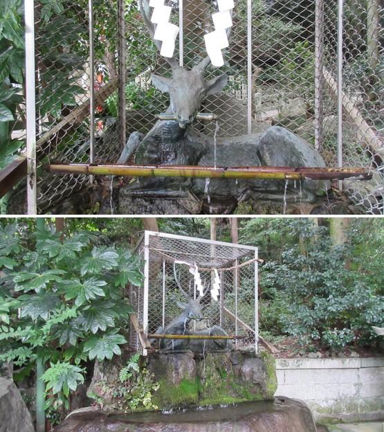 枚岡神社(東大阪市)手水