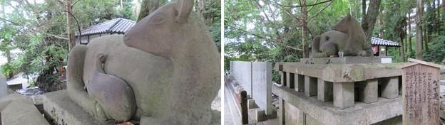 枚岡神社(東大阪市)神使