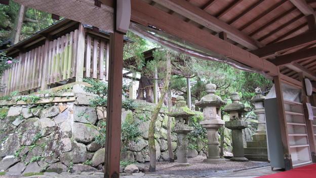 枚岡神社(東大阪市)御神木