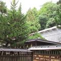 Photos: 枚岡神社(東大阪市)本殿