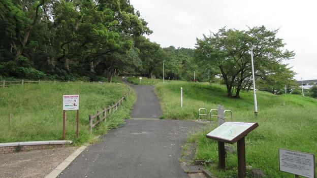 枚岡神社(東大阪市)梅林