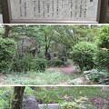 Photos: 小林一茶句碑(柏原市)