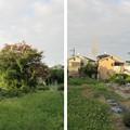 Photos: 畠山義就屋形跡(羽曳野市)