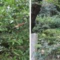 誉田八幡宮(羽曳野市)当宗神社