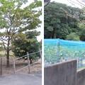 Photos: 応神天皇陵外濠外堤(羽曳野市)