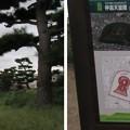 Photos: 岡ミサンザイ古墳(仲哀天皇 惠我長野西陵。藤井寺市)