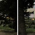 Photos: 鉢塚古墳(仲哀天皇陵陪塚。藤井寺市)