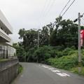 Photos: 高屋城跡 土塁(羽曳野市)東高野街道