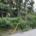 高屋城跡 土塁(羽曳野市)東高野街道