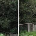 安閑天皇古市高屋丘陵 ・高屋城跡(羽曳野市)