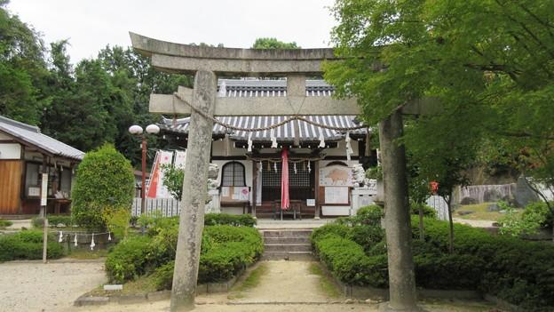 壺井八幡宮(羽曳野市)摂社 壺井権現社(壺井神社)