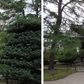 叡福寺(南河内郡太子町)聖霊殿