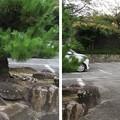 叡福寺(南河内郡太子町)駐車場