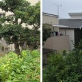 Photos: 用明天皇陵(南河内郡太子町)