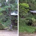 Photos: 弘川寺(南河内郡河南町)鎮守堂・大師堂