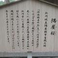 Photos: 弘川寺(南河内郡河南町)隅屋桜