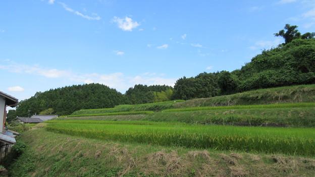 浄信寺城(南河内郡千早赤阪村)