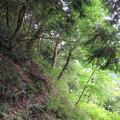 Photos: 千早城(南河内郡千早赤阪村)千早神社参道