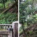 Photos: 金剛寺(河内長野市)光厳天皇陵