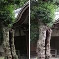 金剛寺(河内長野市)無量寿院
