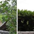 Photos: 金剛寺(河内長野市)摩尼院 南朝行在所