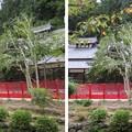 金剛寺(河内長野市)講堂